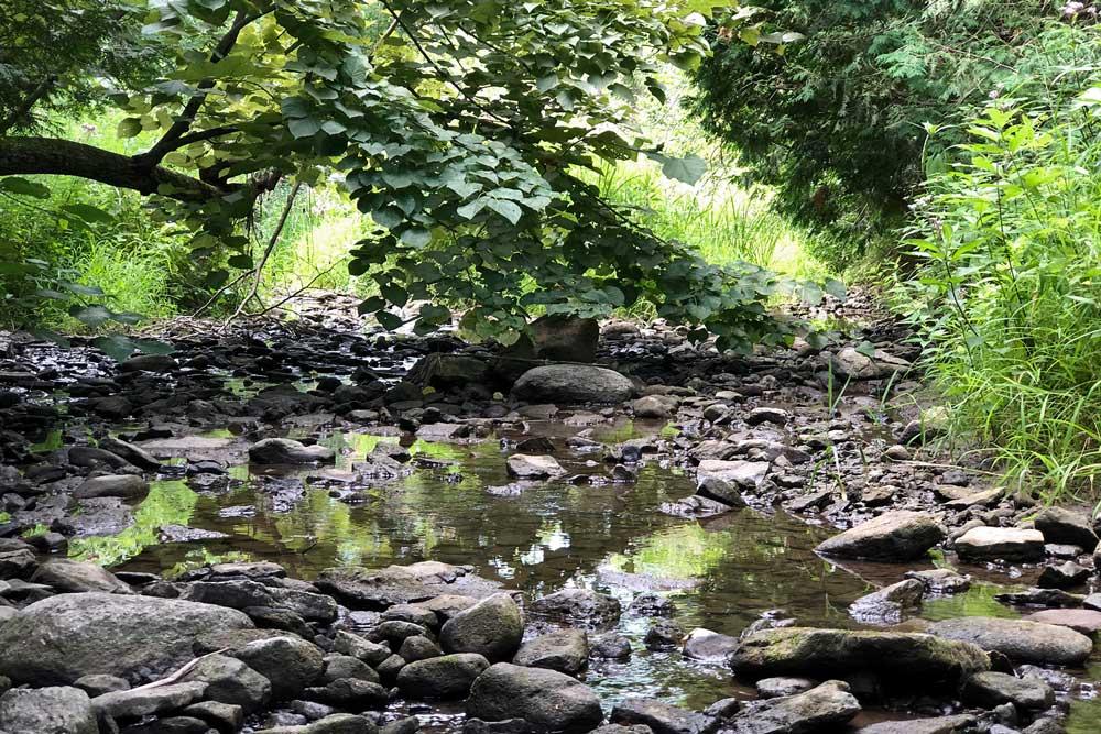Woods of Jennings Creek